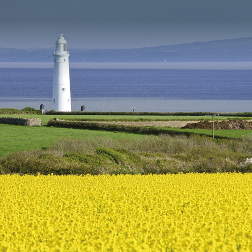 Fields and Lighthouse